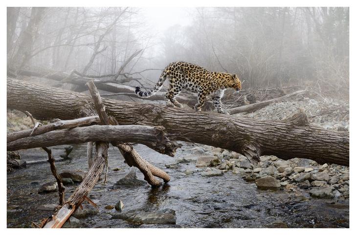 Фото №7 - Лесные истории