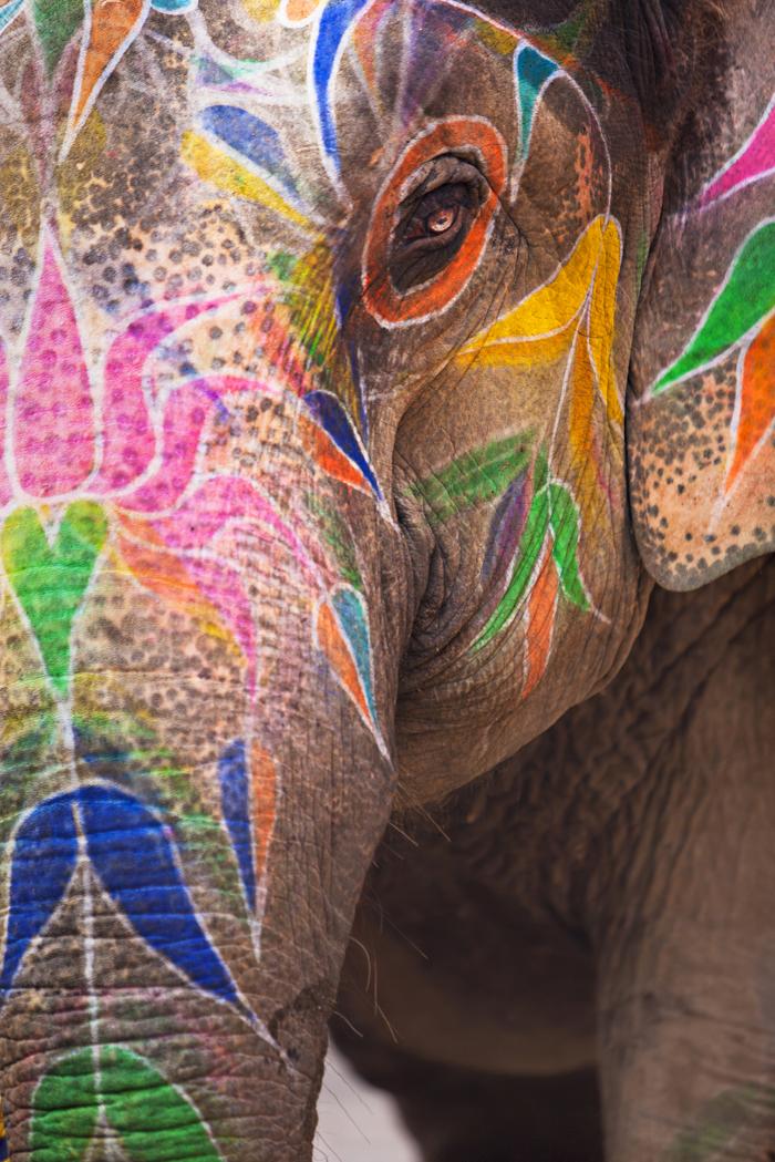 Фото №1 - Ученые выяснили, почему слоны не болеют раком