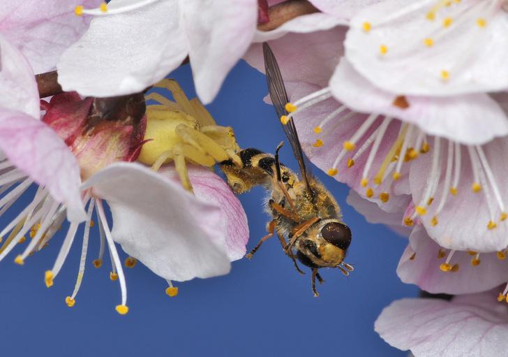 Фото №9 - Драмы, инженерные изобретения, смертельные опасности: как проходит весна в мире насекомых и пауков