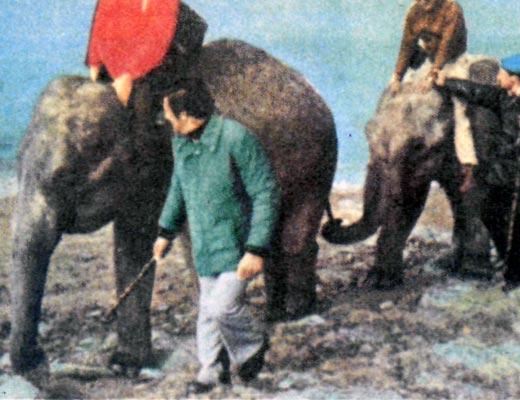 Фото №1 - За Ганнибалом на слонах