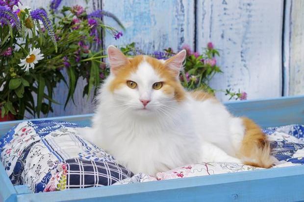 Фото №2 - Котопёс недели: возьми из приюта кота Оливера или пса Гусара