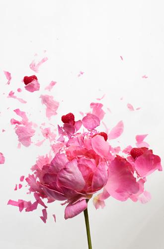 Фото №4 - Сладкая роза: аромат Nina Ricci Rose Extase