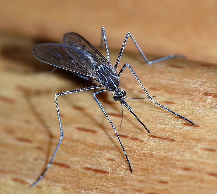 Фото №3 - Маленькие супергерои: 3 семейства насекомых со сверхспособностями
