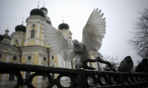Фото №1 - Петербуржцев просят не кормить голубей из-за «попугайной болезни»