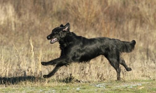 Фото №1 - Онищенко обязал регионы зарегистрировать и привить каждую собаку