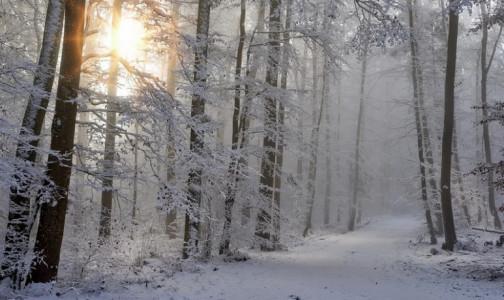 Фото №1 - В банных тапочках по лесу. За праздники врачи НИИ скорой помощи спасли 20 жертв обморожений