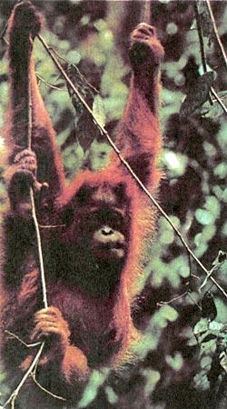 Фото №1 - Приют для лесных людей