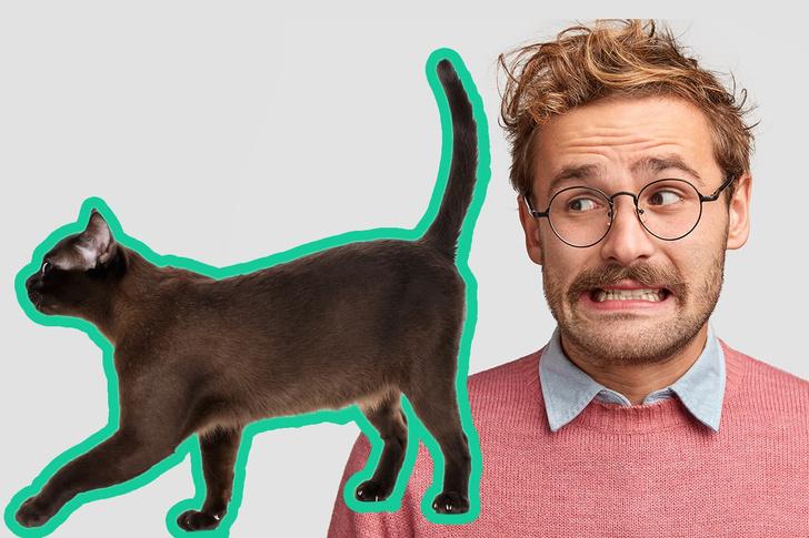 Фото №1 - Почему твой кот сует тебе свой зад в лицо?
