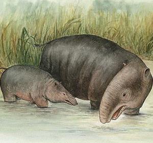 Фото №1 - Предки слонов жили в воде
