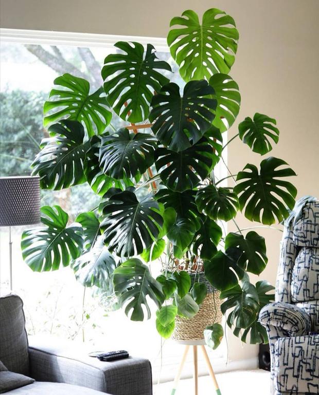 Фото №14 - Лучшие растения для спальни: советы по выбору и уходу