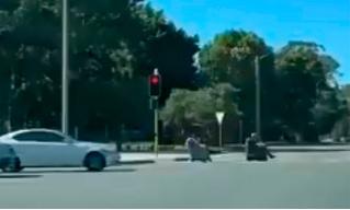 В Австралии прохожие сняли, как два мужика ездят по дороге в самоходных креслах (видео)