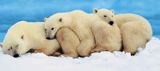 Фото №4 - Охотники на тюленей