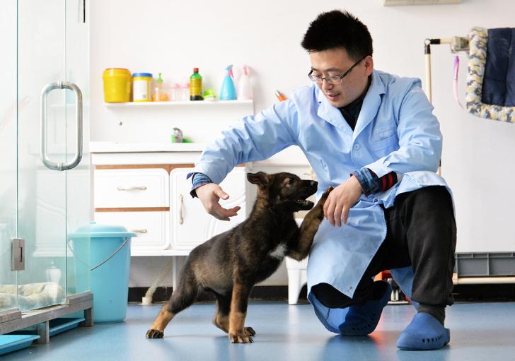 Фото №1 - В Китае начали клонировать полицейских собак