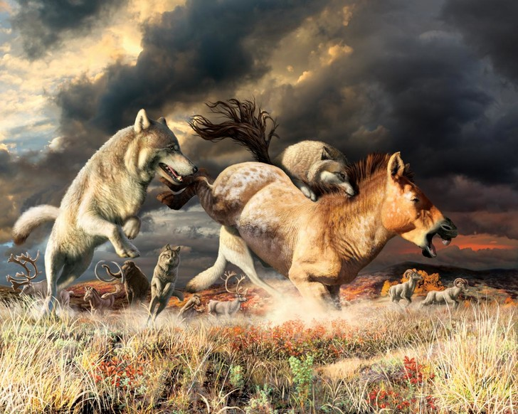 Фото №1 - Ученые выяснили, почему волки не вымерли