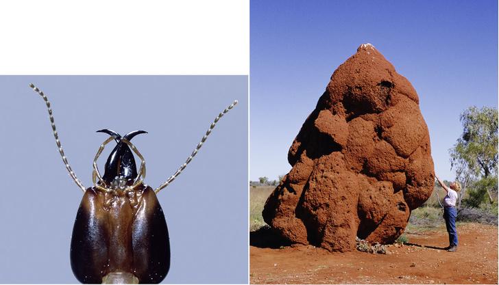 Фото №7 - Древние архитекторы: в чем термиты превзошли человека
