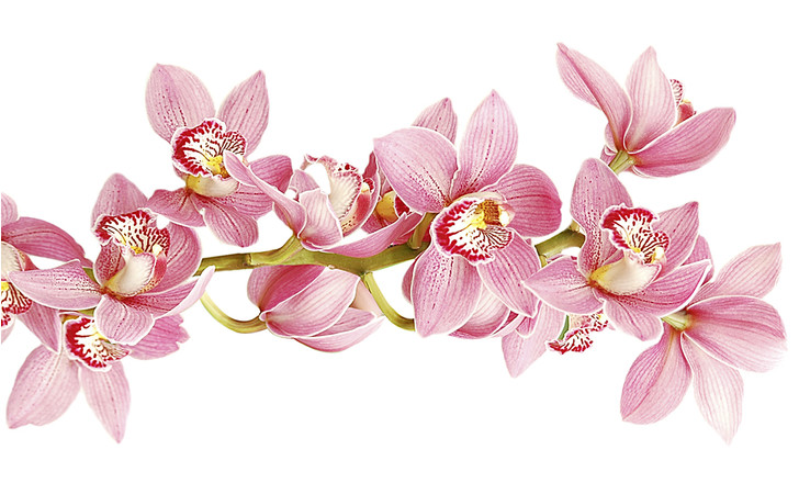 Фото №2 - Ботаника: прекрасные мошенницы