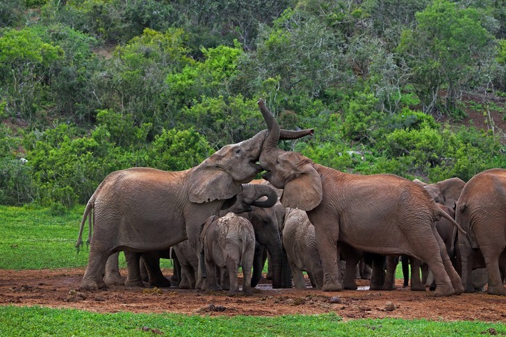 Фото №1 - Нейросеть посчитала слонов в Африке