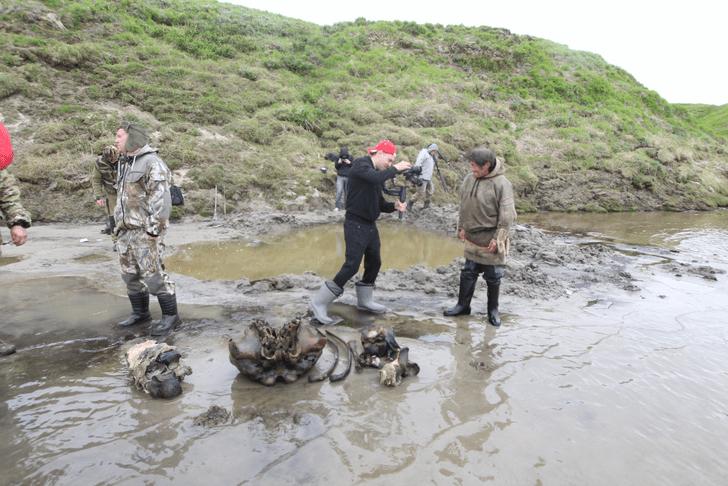 Фото №1 - На Ямале найден скелет взрослого мамонта