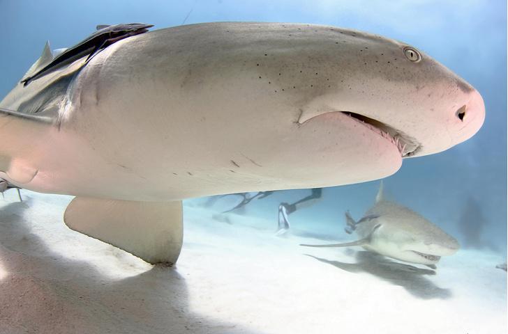 Фото №1 - Один кадр. Багамские острова