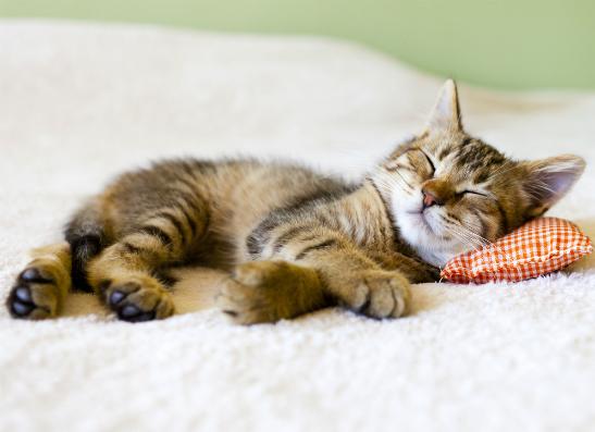 Фото №4 - Отели для животных: где отдохнуть с четвероногим?
