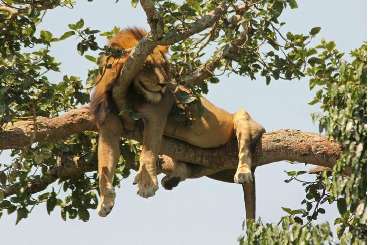 Фото №1 - Отдых на дереве