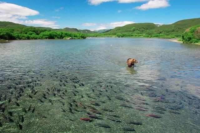 Фото №2 - Медвежья рыбалка. Репортаж cо дна озера