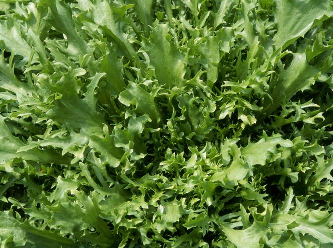 Фото №11 - 10 видов зеленого салата и 6 потрясающе простых рецептов с ним