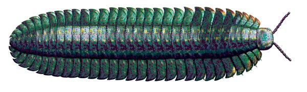 Фото №8 - Золотой век букашек