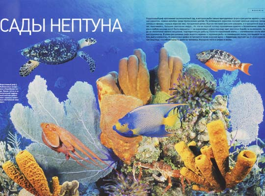 Фото №1 - Сады Нептуна