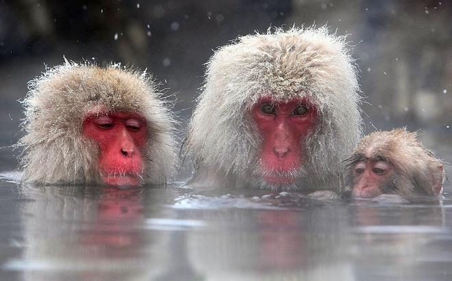 К чему снится обезьяна, сонник