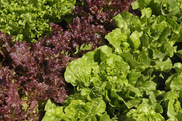 Фото №8 - Зеленые витамины: как безопасно выбрать и правильно есть