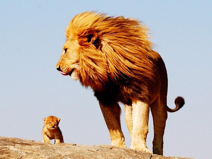 Как выглядят детеныши самых опасных животных фото, тигренок, львенок, слоненок, фото животных, фото детенышей, хищники