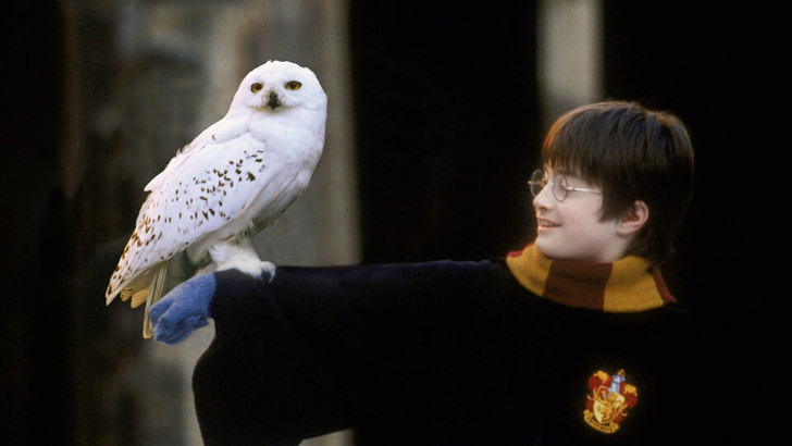 Фото №5 - Мальчик, который влюбил: что магического в Дэниеле Рэдклиффе и почему его невозможно не обожать?
