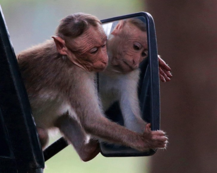 Фото №1 - Зеркало и обезьяна