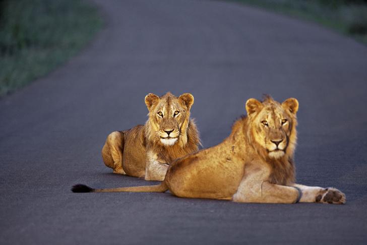 Фото №10 - Язык слонов и львов: словарь рейнджера ЮАР
