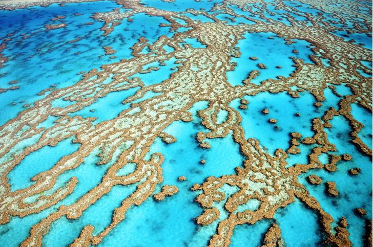 Фото №1 - Ученые «озвучили» коралловый риф