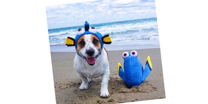 Фото №1 - 20 очаровательных собак в костюмчиках по мотивам мультфильмов Disney