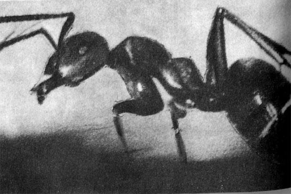 Фото №1 - XX век: машины учатся ходить