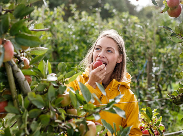 Фото №3 - 10 причин, почему вам необходимо есть яблоки