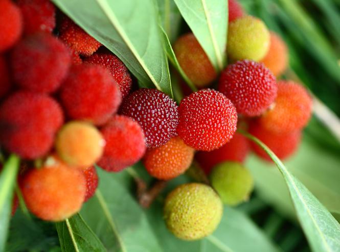 Фото №4 - 12 фруктов, которые вы обязательно должны попробовать этим летом