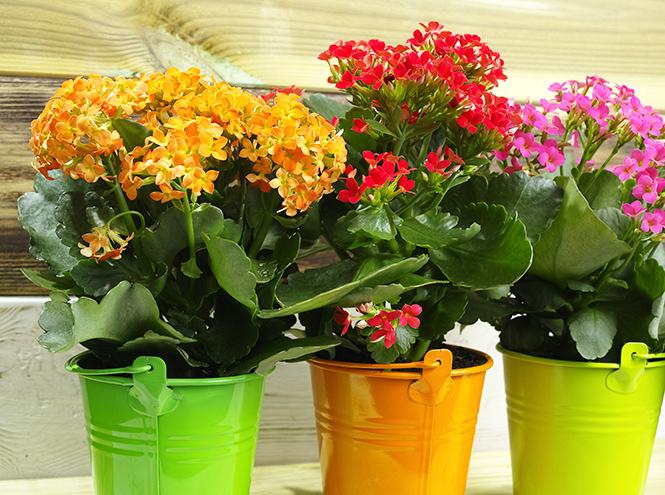 Фото №4 - 6 самых неприхотливых комнатных растений