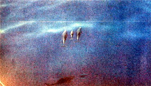 Фото №2 - Пряные ветры Сейшел