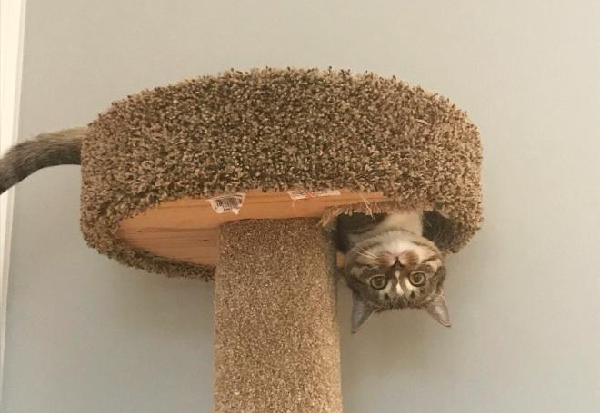Фото №1 - 20 котов, которые победили законы физики