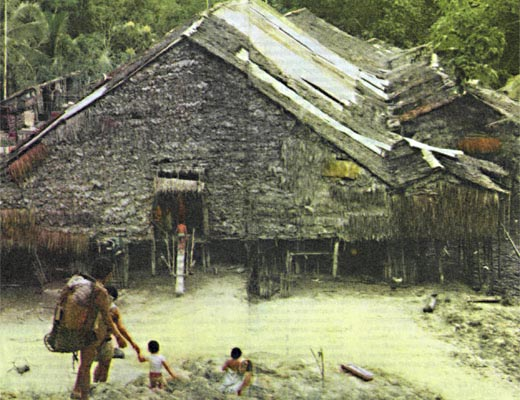 Фото №1 - В лесах Борнео