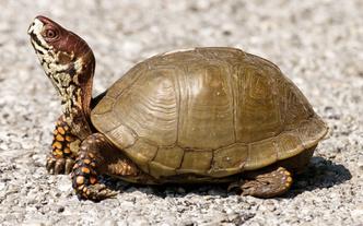 Фото №12 - Тише едешь— дольше будешь: долголетие и другие загадки гигантских черепах