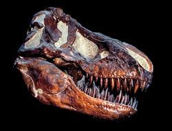 Фото №3 - Вооружение эпохи динозавров
