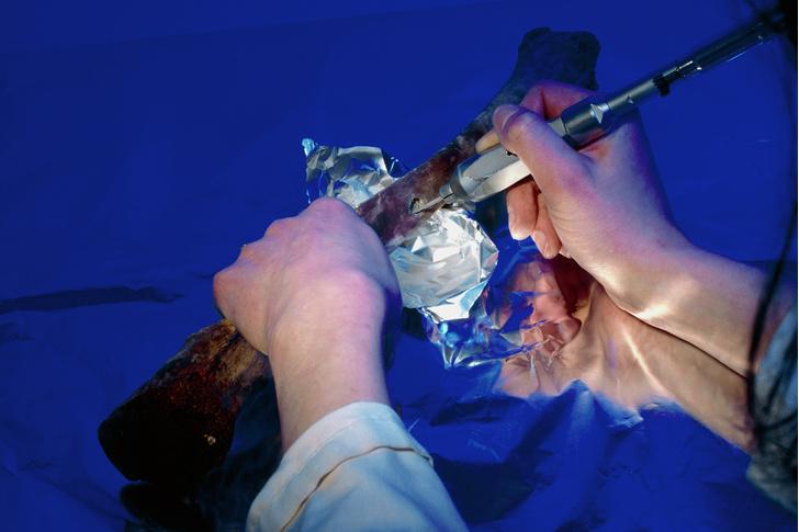 Фото №3 - Наука: биологические часы