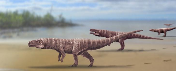 Фото №1 - Ученые обнаружили следы двуногих крокодилов