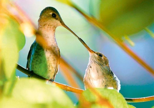Фото №3 - Птицы малого калибра