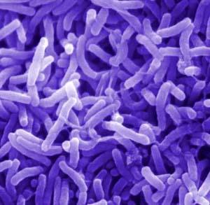 Фото №1 - Эпидемию холеры можно побороть вакцинацией